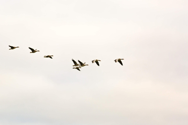 photo-of-flock-of-birds-1721675(2)